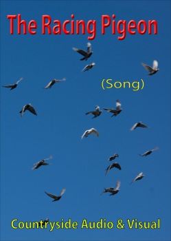 The Racing Pigeon (Song)