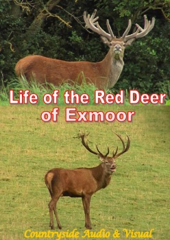 Life with the Red Deer of Exmoor